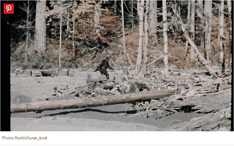 1967 Sighting of Bigfoot in the now famous Patterson-Gimlin film.