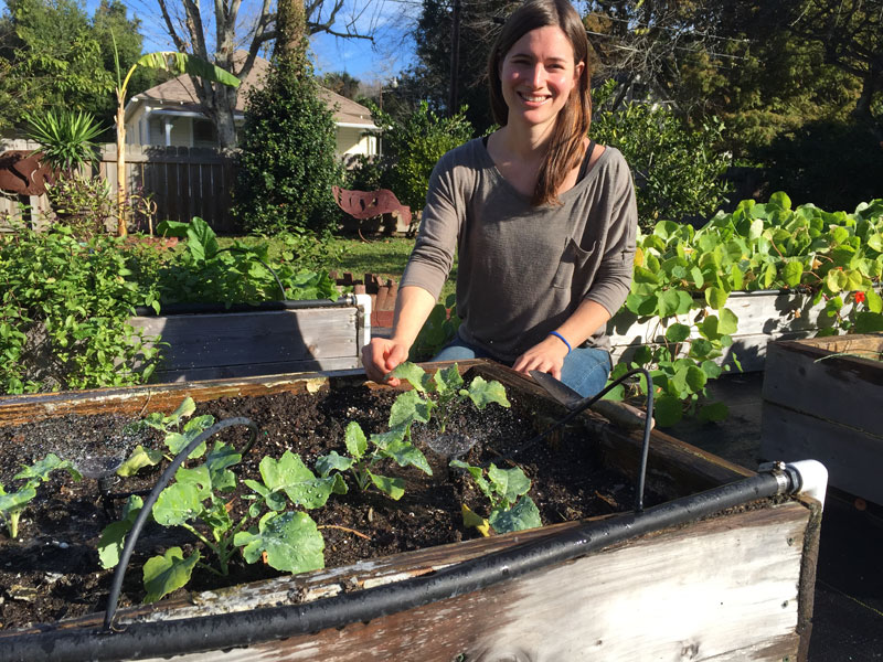 Musings of an urban farmer in his garden. The After-Fifty Adventure Man