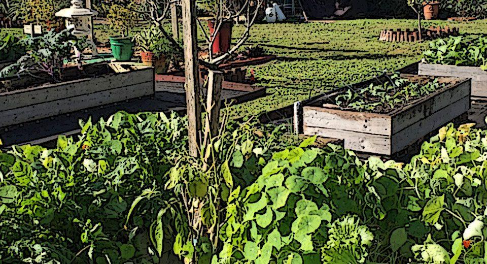 Musings of An Urban Farmer In His Garden