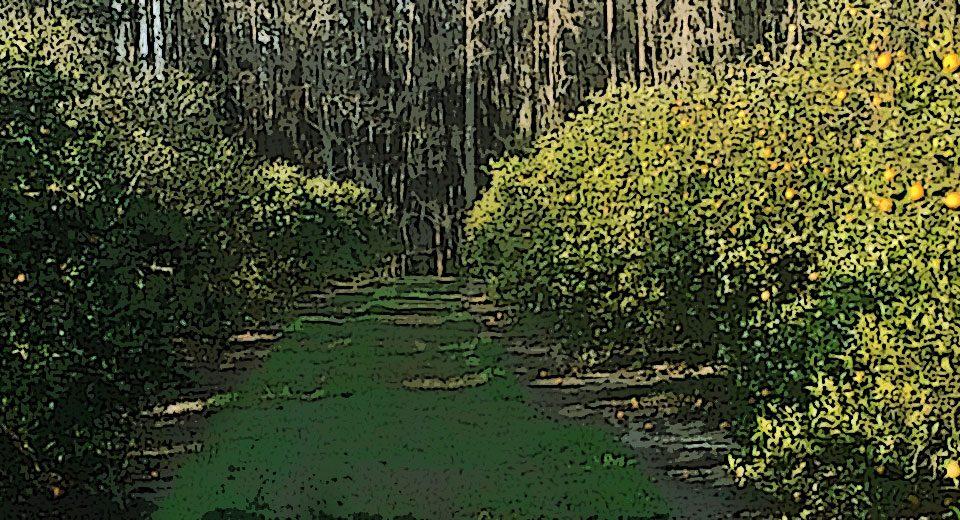 Citrus Groves in Odessa